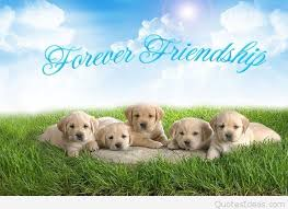 awesome happy friendship day hd background with dogs