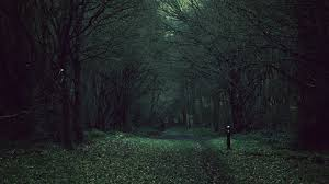 Dark Forest Night Forest Background Hd Wallpapers