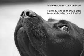 Sprüche Hund Zitate Sprüche
