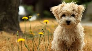100 small hunting dogs that dont shed 14 small hunting dogs