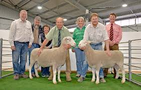 Strong Woolumbool sale result   The Border Watch