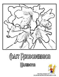 Small Picture Washington State Flower Coloring Page Coast Rhododendron USA