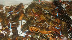 switzerland outlaws boiling lobsters alive gizmodo  every nonfiction fan should consider the lobster the late david foster wallace s incredible essay on the morality of boiling the crustacean alive