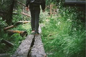 Walking Logs Walking Wood Planks Free Photo On Pixabay