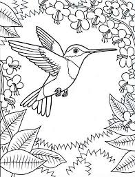 Small Picture Hummingbirds framed by flowers hummingbird coloring pagejpg