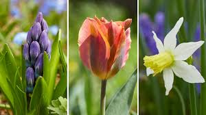 garden bulbs. Ready To Buy Bulbs? Here Are Some Of Our Favorite Mail-order Garden Companies That Sell Large, Healthy And Beautiful Bulbs. See What We Like About Each One Bulbs
