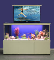 Image result for interesting colorful attractions for your aquarium