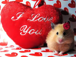 cute animal valentines day wallpaper. Interesting Valentines Cute I Love You Wallpapers Inside Animal Valentines Day Wallpaper R