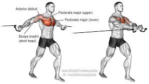 Cable Cross Over Exercise Instructions And Video Weight