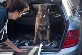 Wenn du einen winzigen hund hast, der nicht die treppe hoch und runter gehen kann, oder einen älteren oder behinderten hund, der hilfe braucht, um in dein auto und wieder heraus zu steigen verwende diese schritte um zu lernen, wie du eine hunderampe für deinen begleiter bauen kannst. Die Hunderampe Ratgeber Und Vergleich 2020