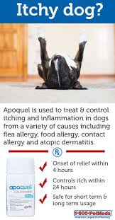 Apoquel | Pets | Pinterest | Dogs, Pets and Fleas