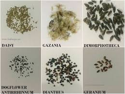 Flower Seed Identification Chart Winters Spring
