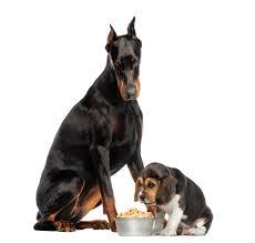 Eukanuba For Large Breed Puppies Exoticonlinepetstoreblog