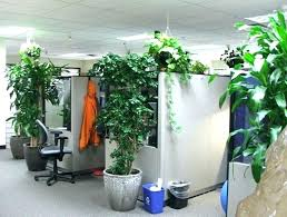 Image Flowering Plants Office Plants No Sunlight Indoor Plants No Sun Low Maintenance Plants For The Office Green Imgruminfo Office Plants No Sunlight Tall Dining Room Table Thelaunchlabco