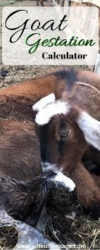 18 Unbiased Nigerian Goat Gestation Calculator