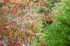 average american flower size photo friday autumn trees on sawnee mountain average us