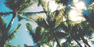 palm trees tumblr header. Summer, Palm Trees, And Beach Image Trees Tumblr Header M