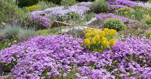flowering ground covers for yard