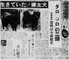 「1959年 - 南極大陸で1年間置き去りにされたカラフト犬タロとジロの生存が確認」の画像検索結果