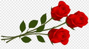 rose single red rose love flower