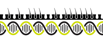 Into the Genetic Weeds of Hair Growth · Institute for Systems Biology