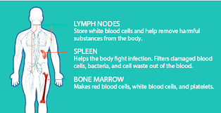 What Is Non Hodgkins Lymphoma Rituxan Rituximab