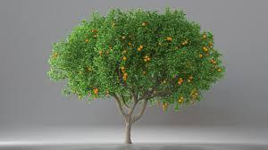 orange tree with fruits 3d model cgstudio