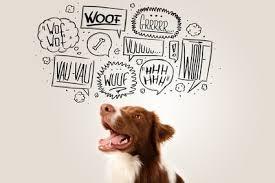 Schöne Hundesprüche Und Zitate Alles Dogde