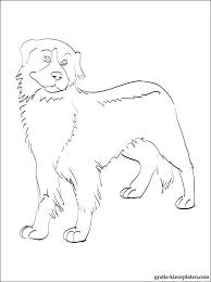Kleurplaten Berner Sennenhond Gratis Kleurplaten