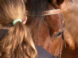 Rückenmuskulatur aufbauen beim, pferd
