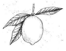 手書きのベクトル イラスト レモンのコレクション葉花の植物の
