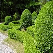 Foto: potatura siepi e piante in giardino a roma e provincia di