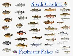 Freshwater Fish Identification Chart 54 Studious Sea Fish Identification Chart
