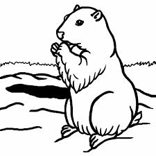 Dessin De Marmotte A Imprimerl