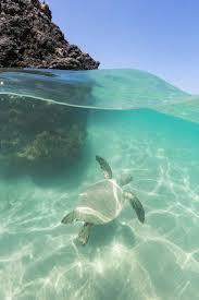 Laniakea Beach Also Known As Turtle Beach Hawaiicirclejerk