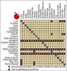 Fruit Tree Pollination Chart Apple Pollination Chart Nurseries In The Pacific Northwest