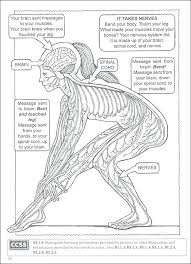 Human Body Coloring Pages Human Skeleton Coloring Page Free