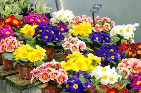 bedding flowers seasonal bedding summer bedding flowers for best bedding flowers for full sun bedding flowers