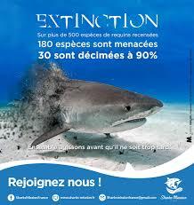sharks mission sauver les requins quelques unes de nos campagnes