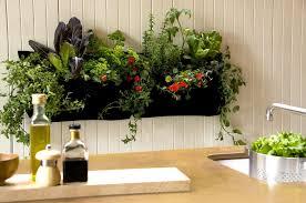 tips for growing an indoor vertical garden picture