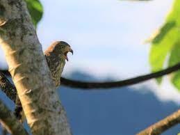 Santa Juana Bird Watching Guided Tour | Costa Rica Experts