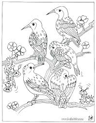 Big Bird Coloring Page Koshigayainfo