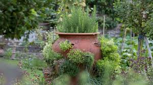 herb garden planting ideas and advice