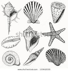 Seashell Design Seashells Doodle Seashells And Starfish For You Design And