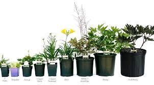 Nursery Container Sizes Chart Unique Plant Pot Miahomeremodeling Co