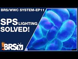 SPS reef tank <b>lighting</b> made simple and stable. - The BRS/WWC ...
