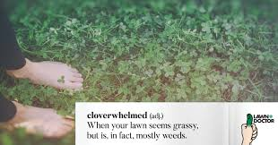 weeds infographic