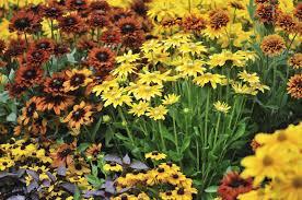 fall garden flowers. Fall Garden Flowers A