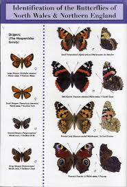 Moth Identification Chart Butterfly Identification Chart
