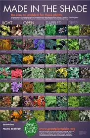 7 Color Combos That Work For Beautiful Container Gardens  Garden ClubContainer Garden Ideas For Shade
